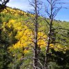 Fall colors as seen from the pipeline trail