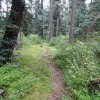 The Mormon Mountain trail