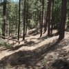 Hiking the West Spruce mountain trail