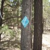 Blue diamond trail marker on the Land of the Pioneers trail