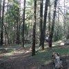 Along the Mormon Mountain trail