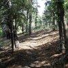 Aspen loop trail trail