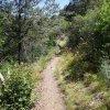 Barnhardt trail