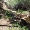 Reavis Creek