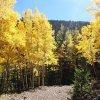 Fall colors along the Abeneau trail