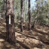 Grapevine trail