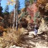 Fall colors on the North Kaibab trail