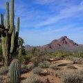 Saguaro on the Wild Horse (Lead) trail