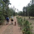 Hikers along the Willow springs lake bike trail