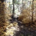 Fall colors along the Taylor cabin trail