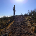 Hiking in the Thunderbird Conservation Park