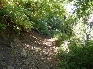 Hiking along the Six shooter trail