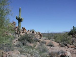 Along the Dixie mine trail