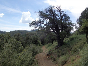Hiking along the Watershed trail