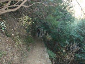 Hiking along Mount Takao