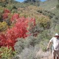 Fall colors along the trail to Thicket spring mine trail