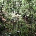 Bear Mountain primative area
