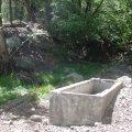 Oak spring along the Oak trail