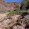 Hiking to the North Bass Camp from the Colorado river