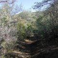 Rogers Trough trail