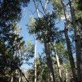 Dry lakes trail trees