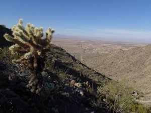 Cholla enjoys the views of the Radio tower trail