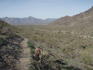 along the Alta Bajada loop trail