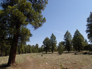 Hiking along the Contenental Loop